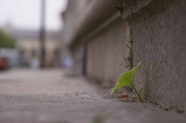 nature-contre-beton
